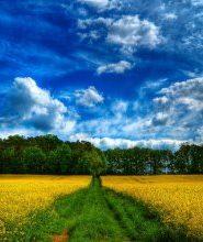 Любимый уголок природы. Сеанс релаксации
